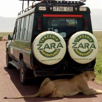 zara safari