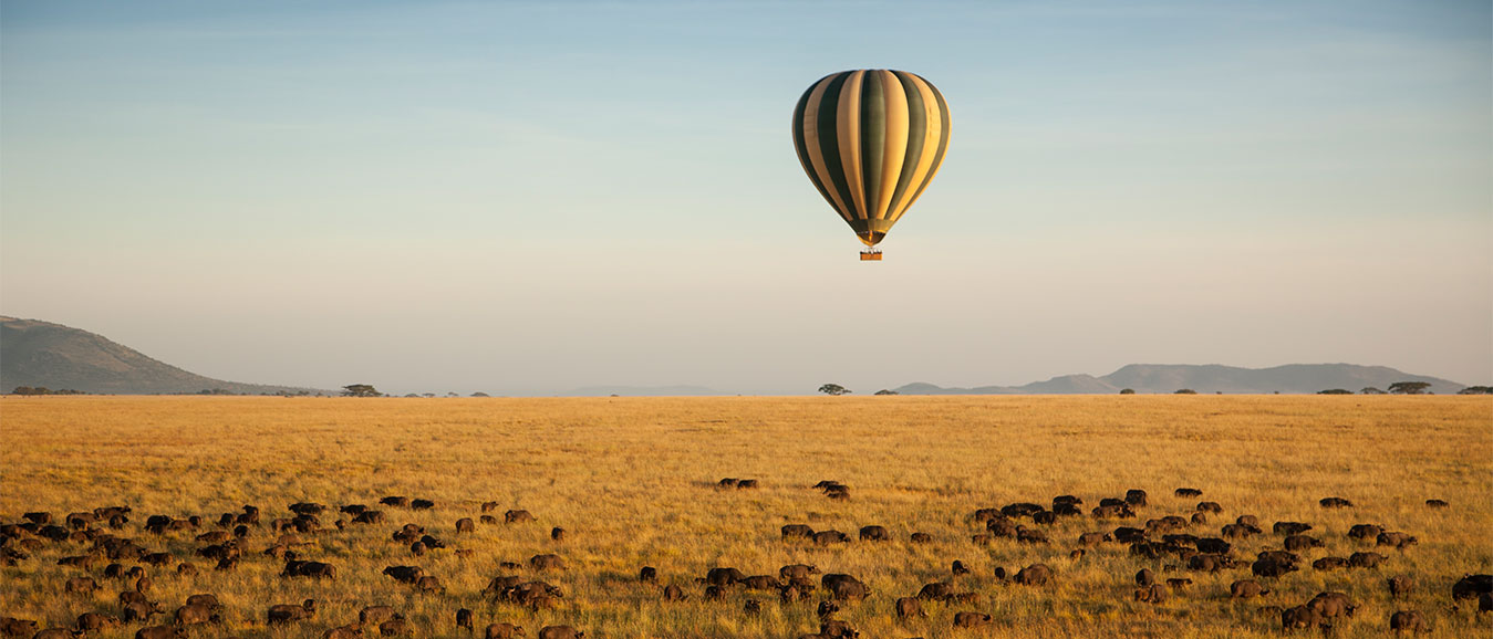 Experience the Wildlife of Tanzania