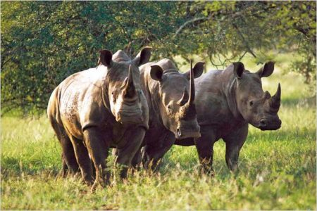 East African Safari Packages -Zara Tours